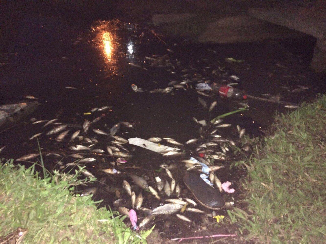 Falta de oxigenación en el espejo de agua habría sido la posible causa de muerte de peces