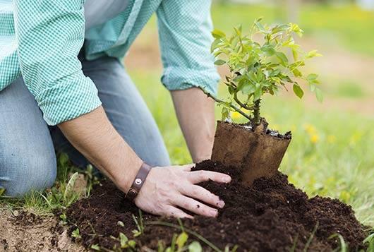 Integrantes de Interact plantarán árboles en el paseo 7 de septiembre