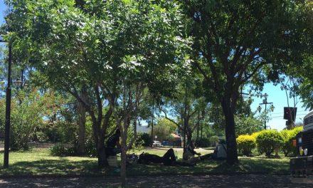 Campamentos de indigentes proliferan en la ciudad