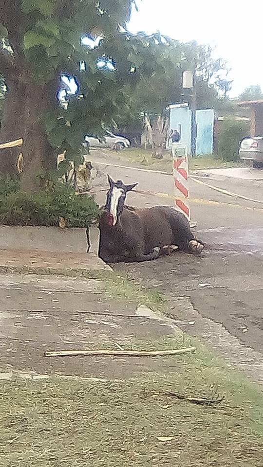 AUTOMOVILISTA ATROPELLÓ A UN CABALLO Y ESCAPÓ DEL LUGAR
