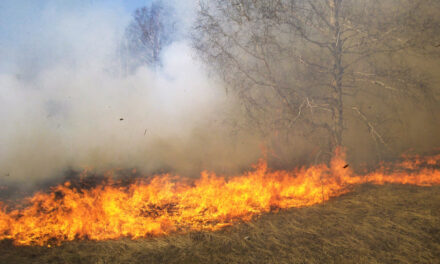 Rige en Uruguay decreto que prohíbe realización de fuego y quemas.